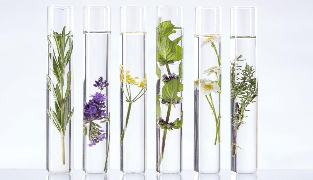 Kenniscentrum Plantenstoffen
